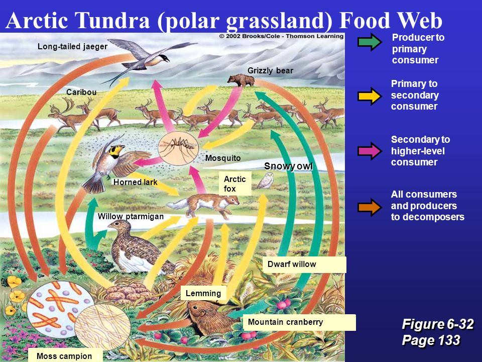 Biogeography: Climate, Biomes, and Terrestrial ... Grassland Secondary Consumers