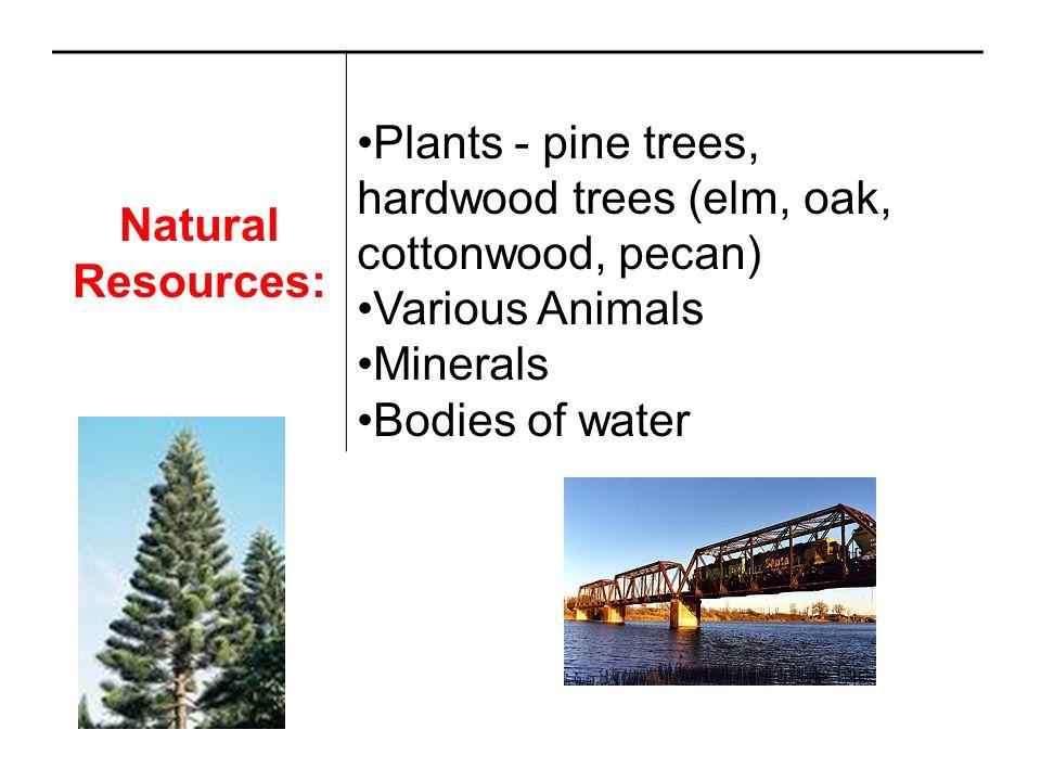 Natural Resources: Plants - pine trees, hardwood trees (elm, oak, cottonwood, pecan) Various Animals.
