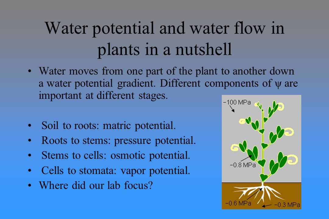water potential Water potential problems answer key 1 what is the solute potential ψ s of a 10m sugar solution at 22 degrees celsius under standard atmospheric conditions ψ.