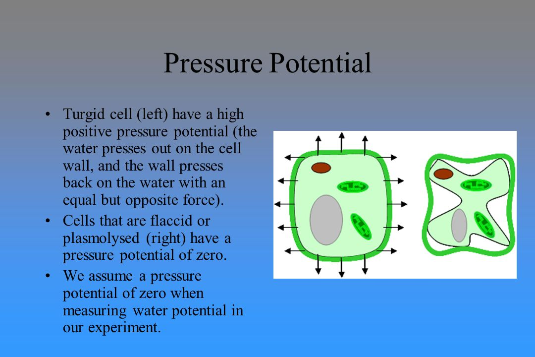 experiment of osmotic potential Understanding the osmotic potential of plant cells is a key part of understanding  cellular processes here we present two methods of determining osmotic.