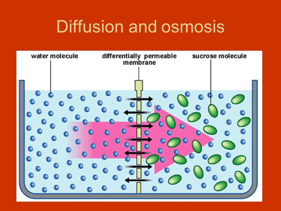 relationship of diffusion and osmosis