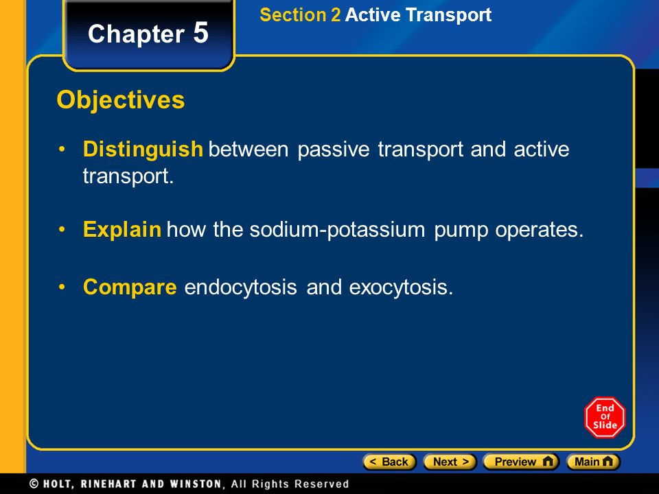 Section 2 Active Transport