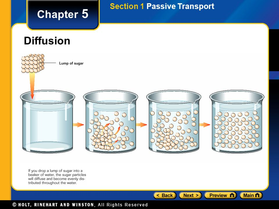 Section 1 Passive Transport