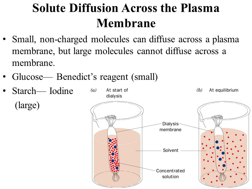 diffusion and glucose The effective diffusivities of glucose and its linear analog glucitol were measured by a liquid chromatographic technique at 30 °c within water-filled silica and aluminosilicate catalysts of mean pore size ranging from 74 to 116 å for glucose, the effective diffusivity decreased from 108 × 10-6 to 177 × 10-9.