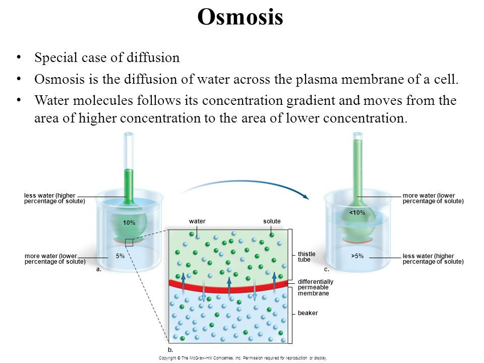 osmosis dialysis tubing hypertonic isotonic These artificial cells were placed in hypertonic, hypotonic, or isotonic 2012 egg osmosis lab definition of osmosis: affect osmosis through dialysis tubing.