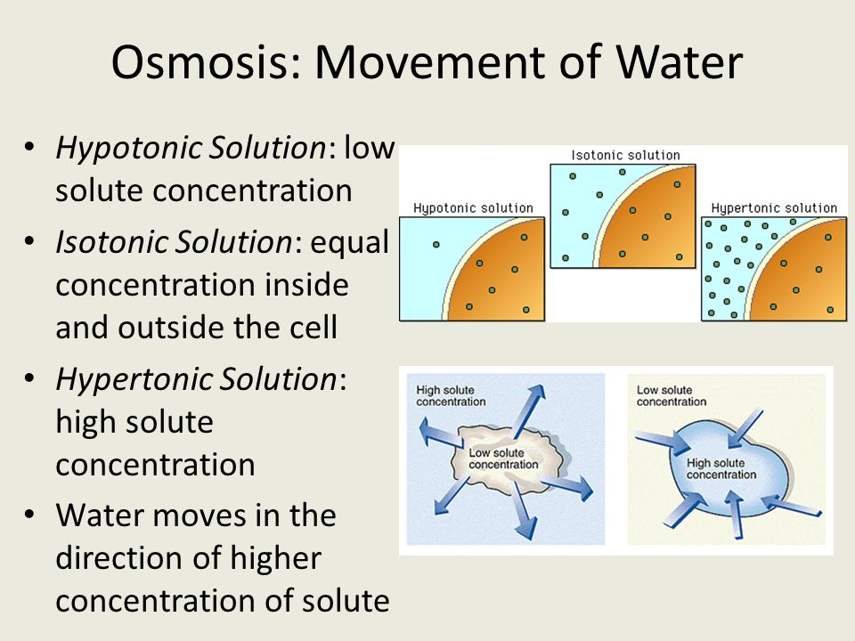 osmosis and solute concentration Salt triggers osmosis by attracting the water and causing it to move toward it,   when you add water to a solute, it diffuses, spreading out the concentration of  salt.
