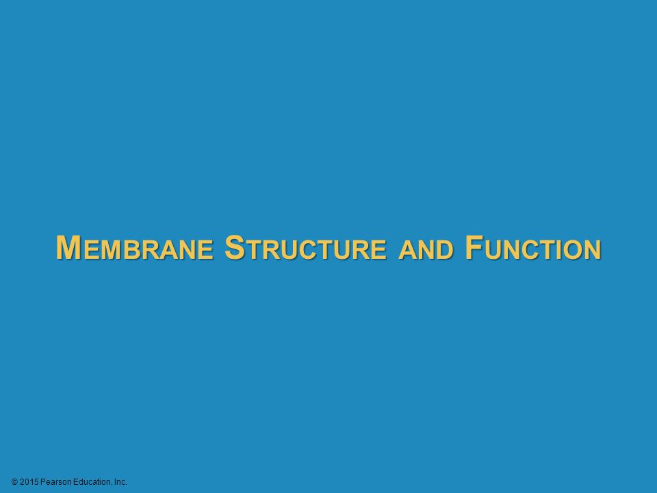 structure and functions of education Structural functionalism is a broad perspective in sociology and anthropology which interprets society as structure with interrelated parts functionalism addresses the society as a whole in.