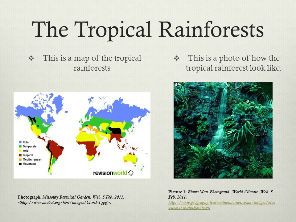an introduction to the tropical rainforests of the world A short intro: tropical rainforests i will do introduction write-ups about the different the biodiversity of tropical rainforests of the world is.