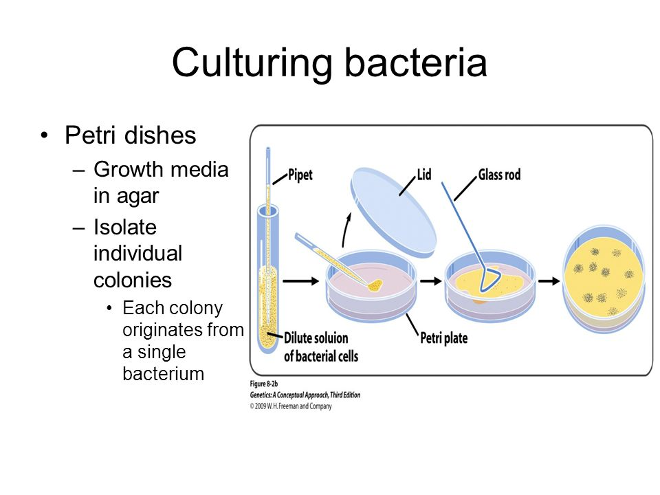 Chapter 8 – Bacterial and Viral Genetic Systems - ppt download