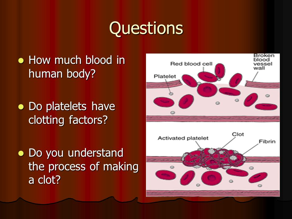 blood administration. - ppt video online download, Sphenoid