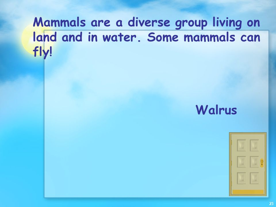 Mammals are a diverse group living on land and in water