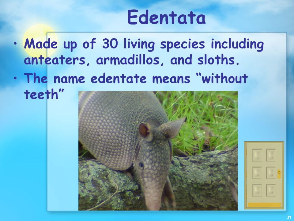 Edentata Made up of 30 living species including anteaters, armadillos, and sloths.