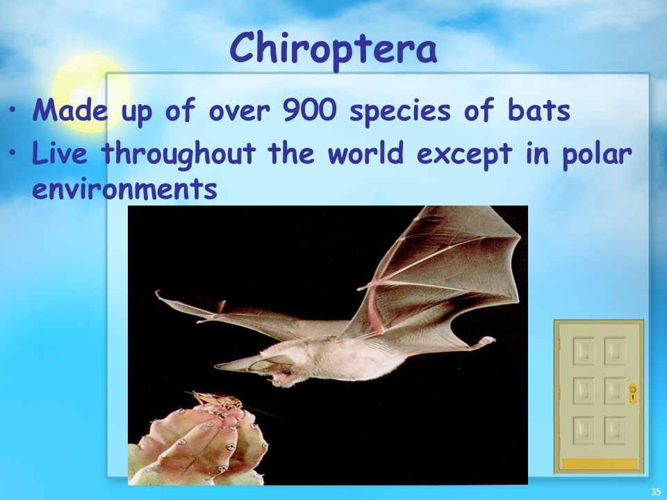 Chiroptera Made up of over 900 species of bats