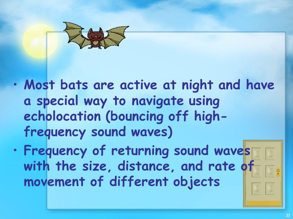 Most bats are active at night and have a special way to navigate using echolocation (bouncing off high-frequency sound waves)
