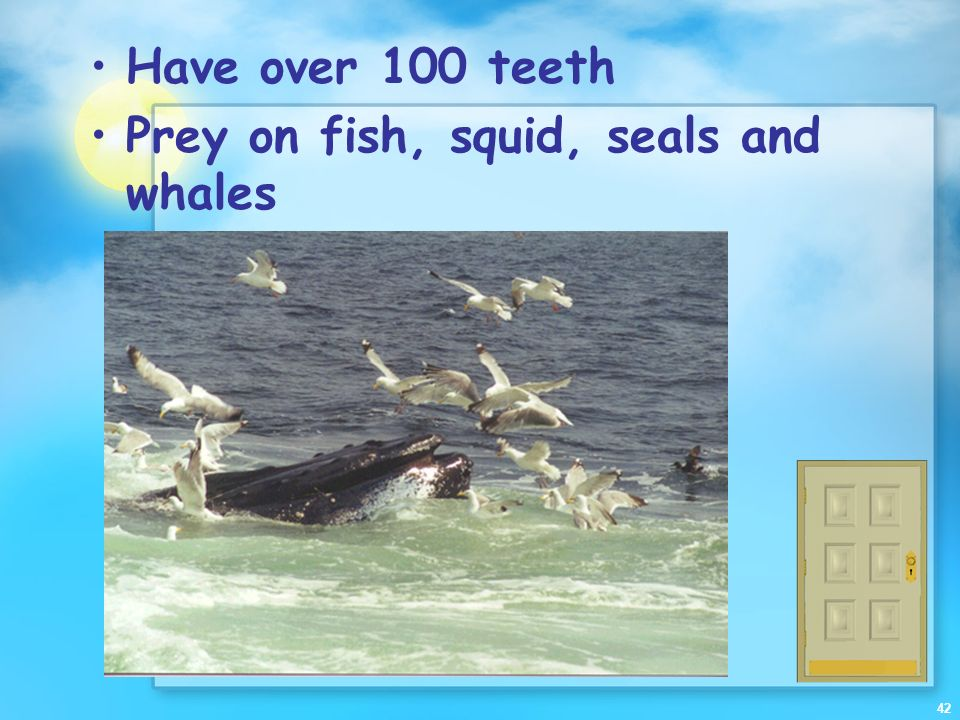 Have over 100 teeth Prey on fish, squid, seals and whales