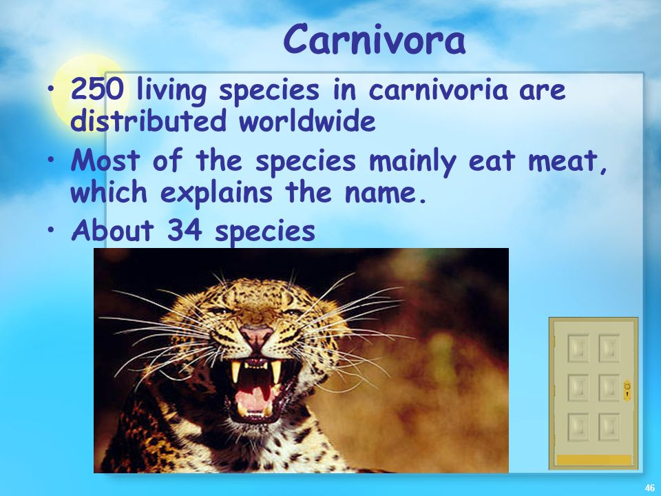 Carnivora 250 living species in carnivoria are distributed worldwide
