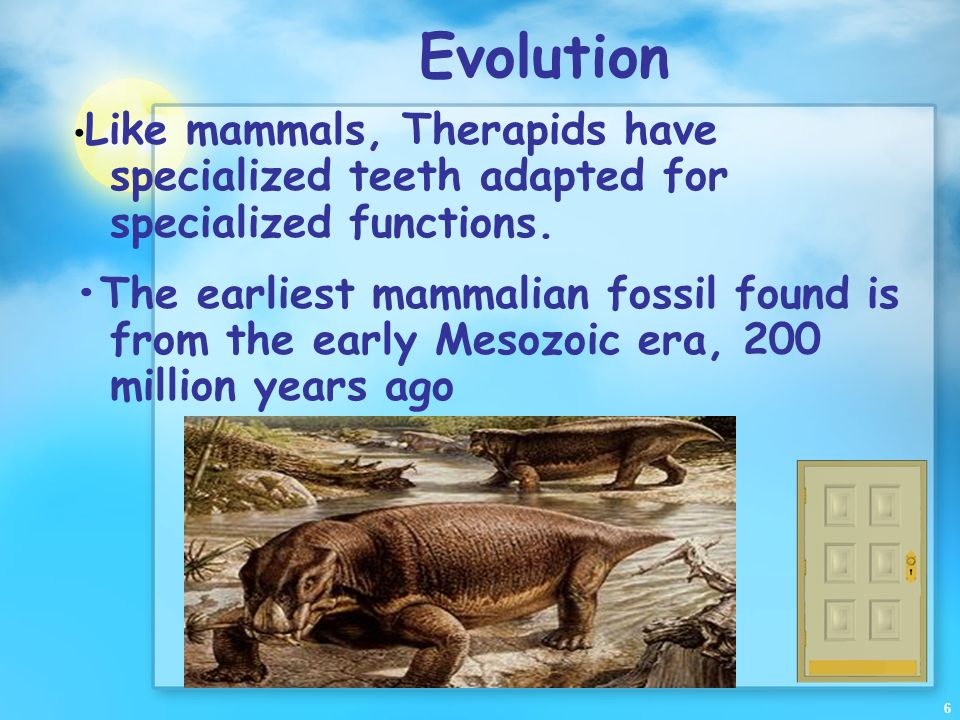 Evolution •Like mammals, Therapids have specialized teeth adapted for specialized functions.