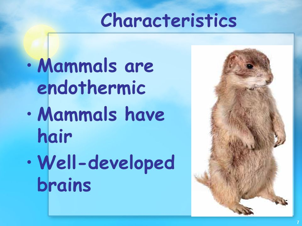 Characteristics Mammals are endothermic Mammals have hair Well-developed brains