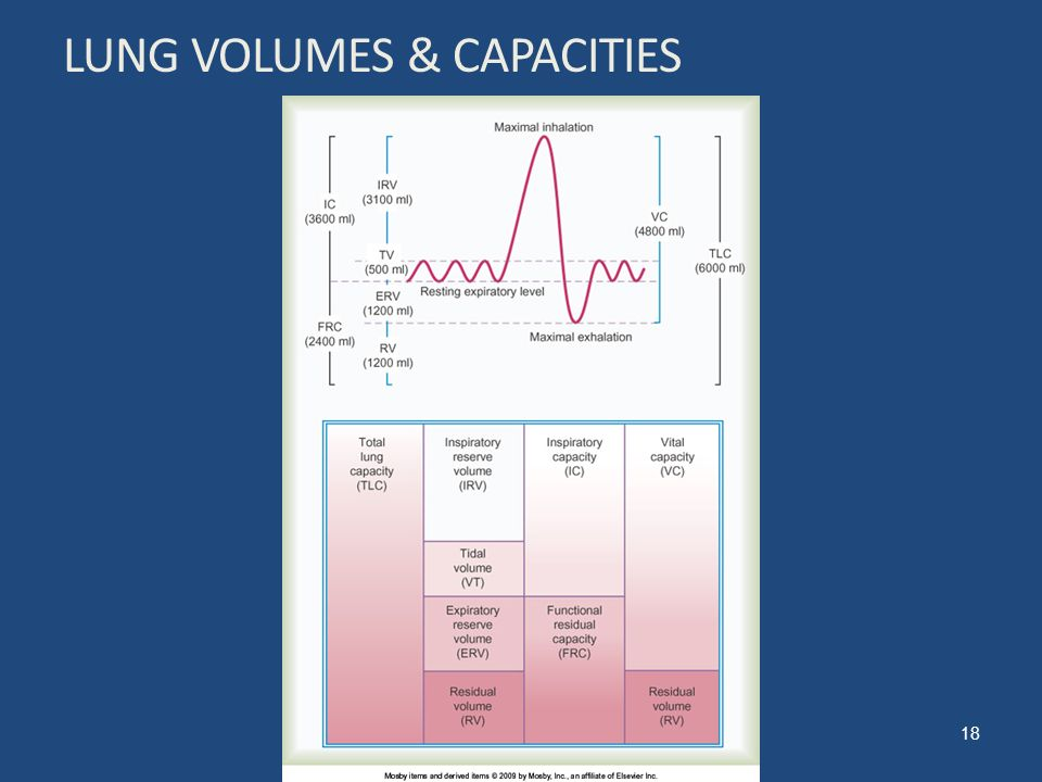 activity 2 measuring normal respiratory volumes Measurement of lung volumes provides a tool for understanding normal  19 - 2  human physiology with vernier objectives in this experiment, you will.