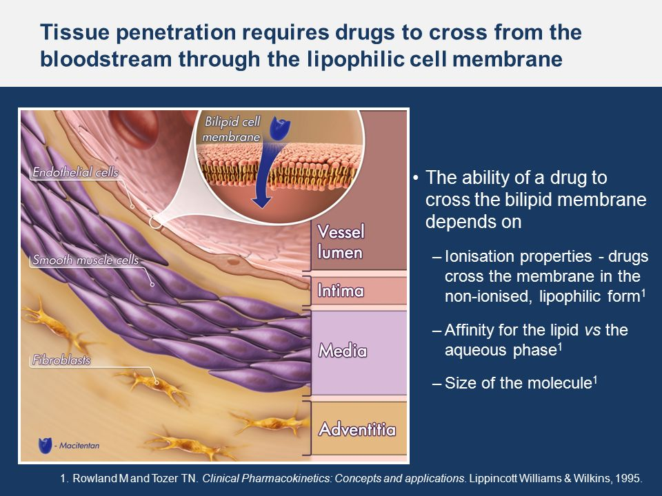 penetration of gentamicin into lung tissues