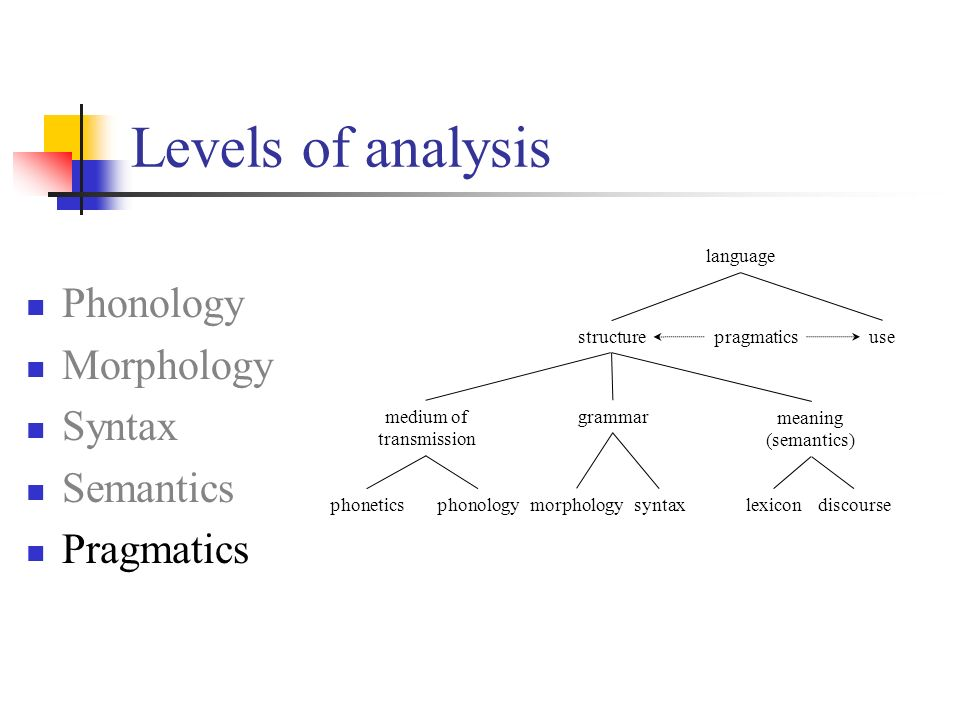 morphology and syntax relationship marketing