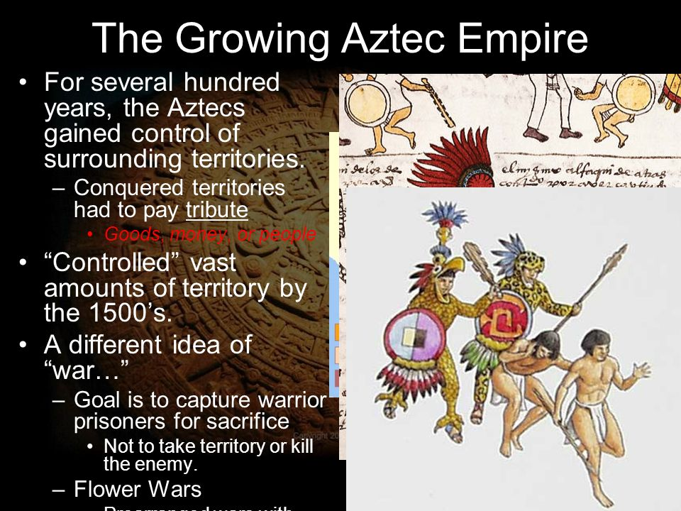 aztec flower wars flowers ideas for review