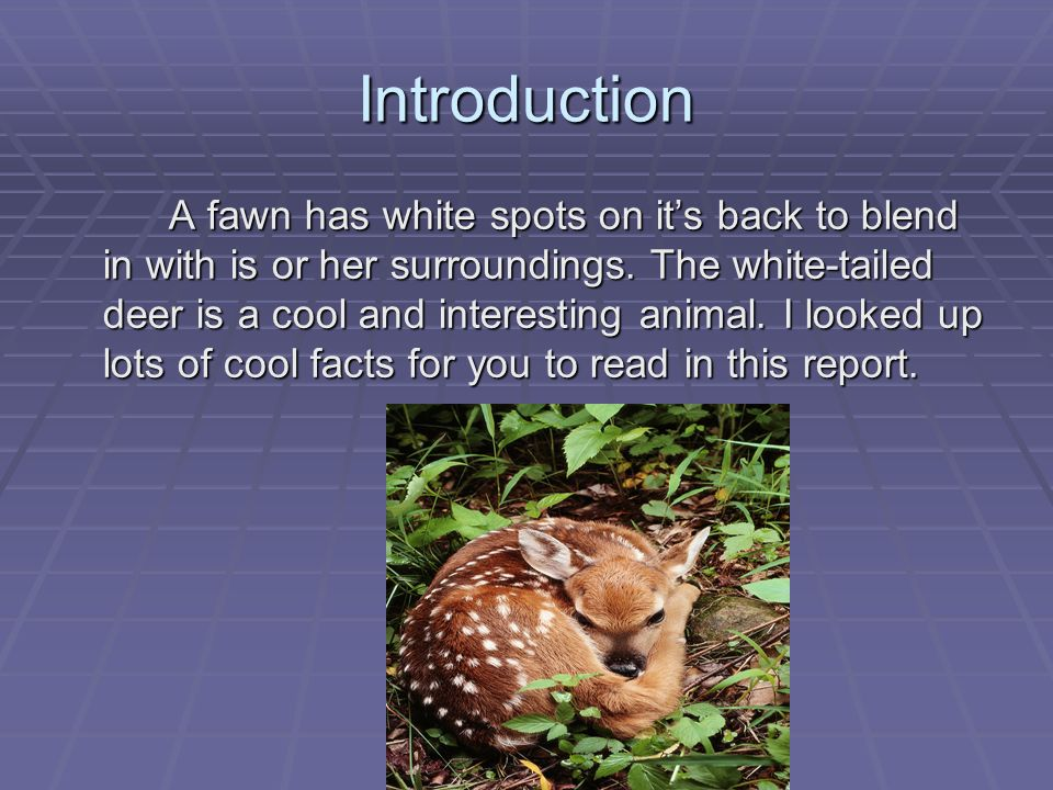 Deer: Frequently Asked Questions