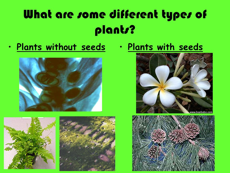 Topic plants aim what are seed plants ppt video for Different kinds of plants