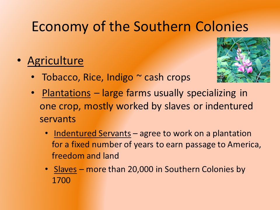 economy for the south colonies
