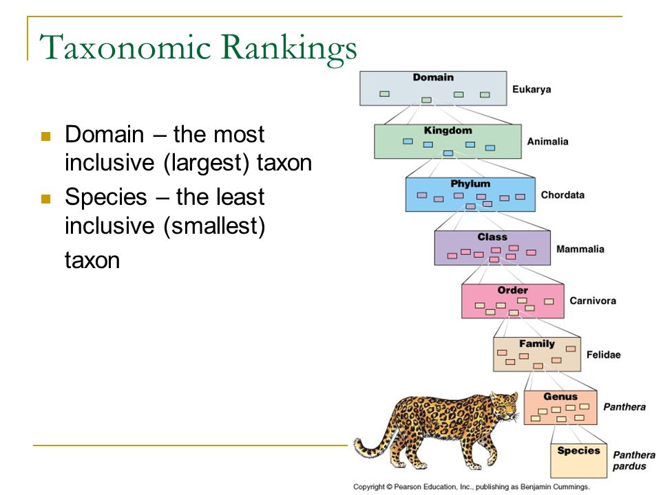 Taxonomic Rankings Domain – the most inclusive (largest) taxon