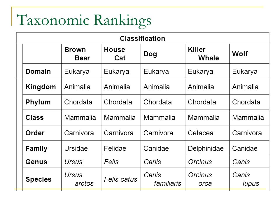 Taxonomic Rankings Classification Brown Bear House Cat Dog