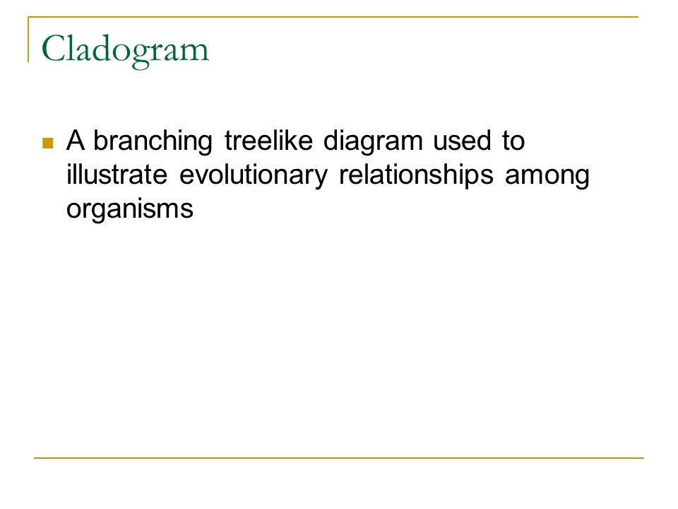 Cladogram A branching treelike diagram used to illustrate evolutionary relationships among organisms.