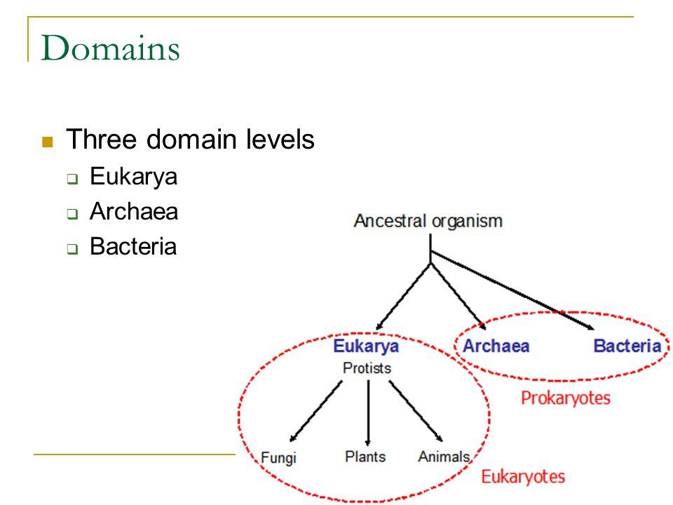 Domains Three domain levels Eukarya Archaea Bacteria
