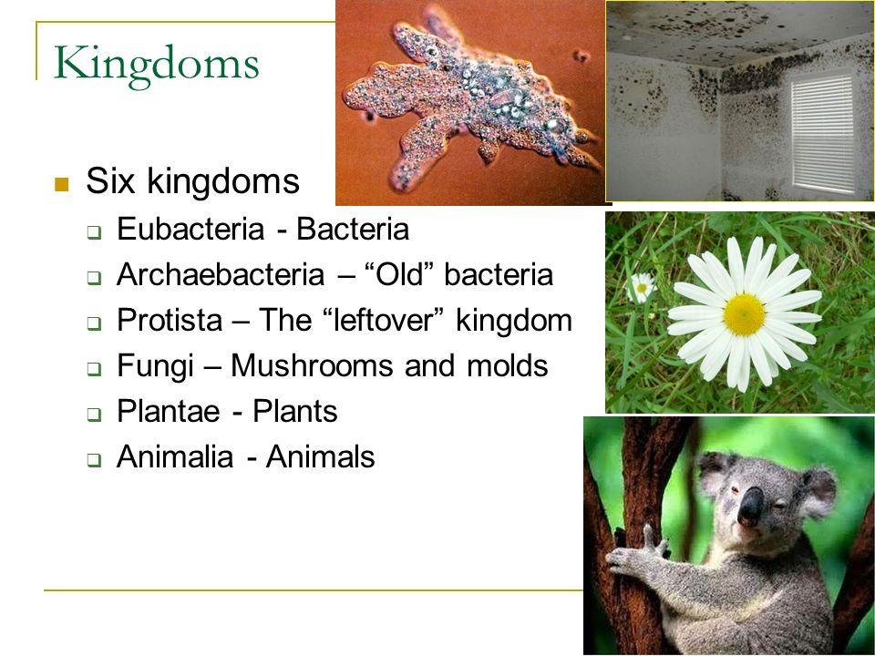 Kingdoms Six kingdoms Eubacteria - Bacteria