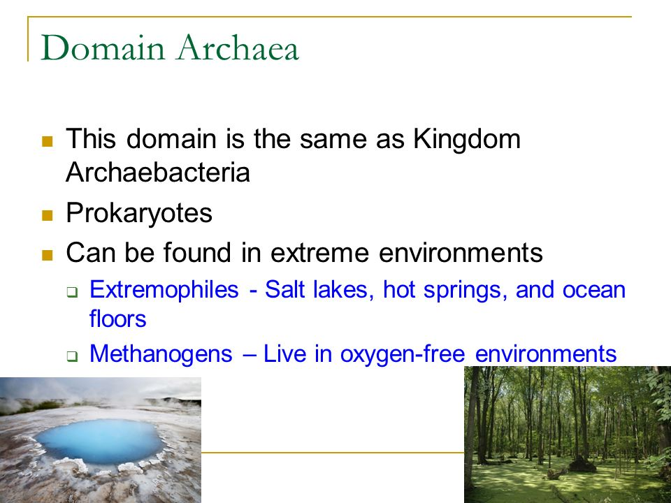 Domain Archaea This domain is the same as Kingdom Archaebacteria