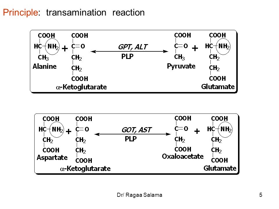Principle: transamination reaction
