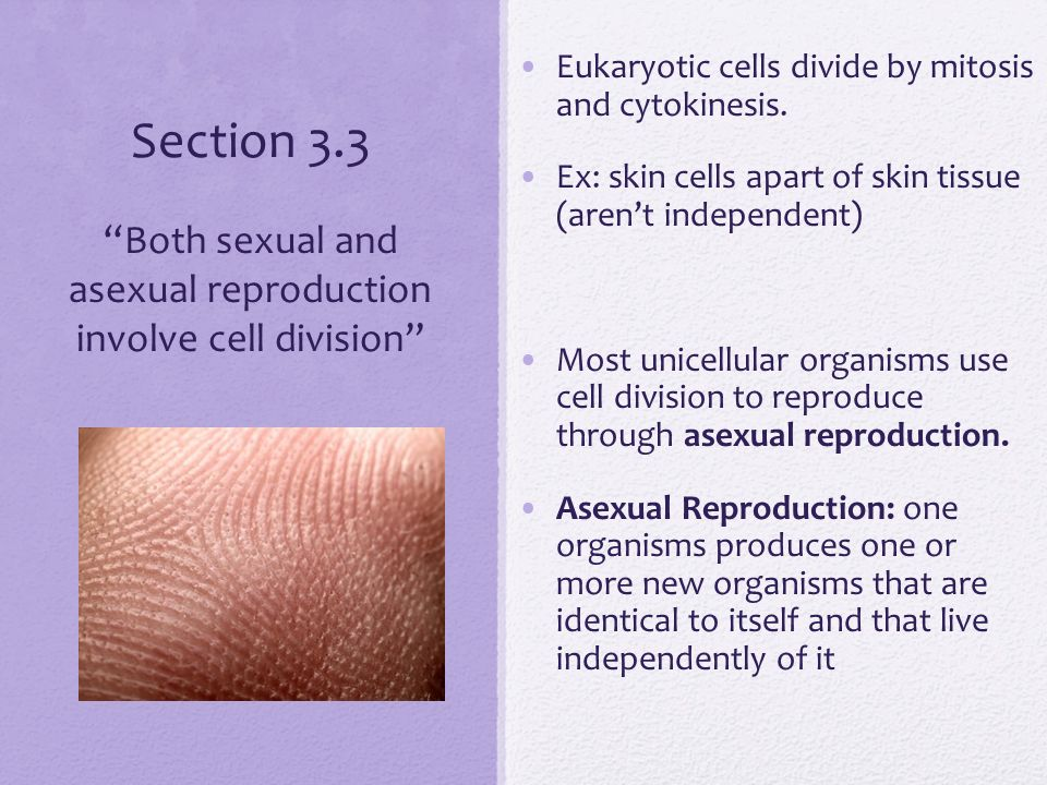 Cell division used for asexual reproduction by unicellular organisms images 67