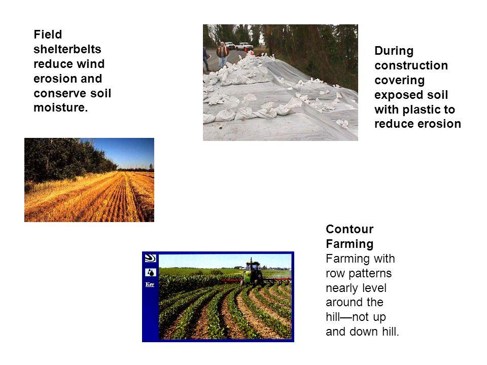 Field shelterbelts reduce wind erosion and conserve soil moisture.