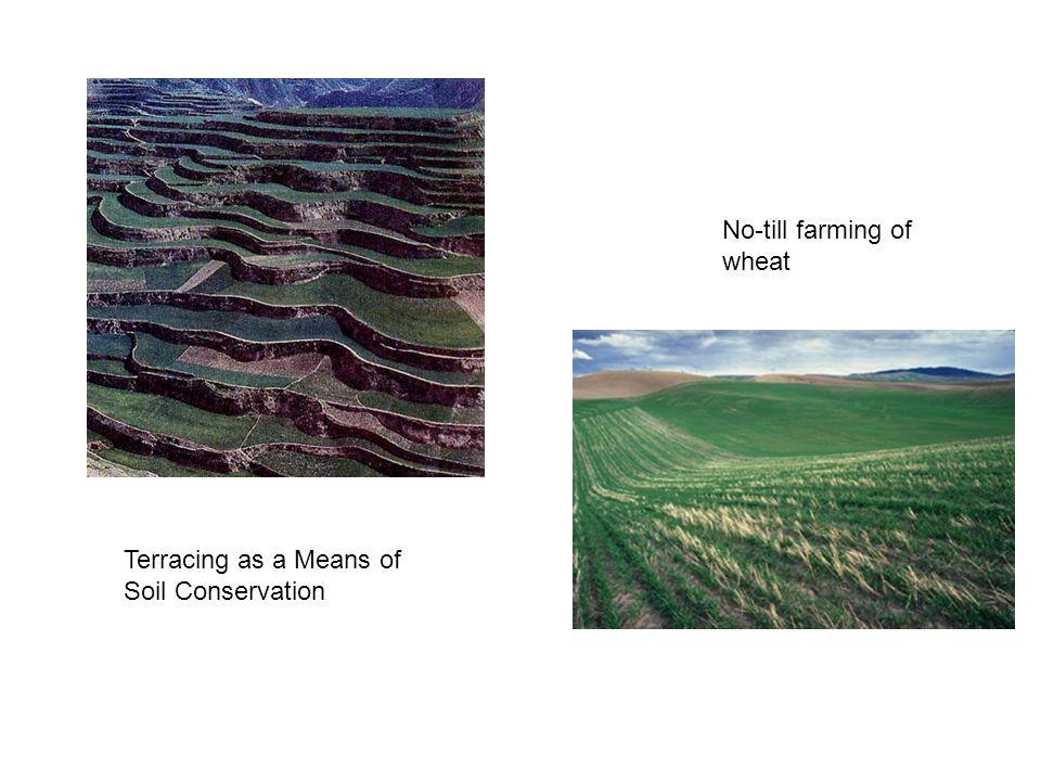 No-till farming of wheat