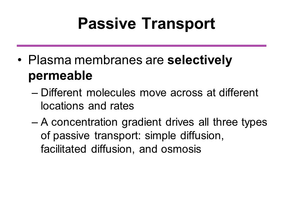 osmosis and selectively permeable membrane The passive transport processes of osmosis and diffusion permit transport across  semipermeable membranes a selectively permeable.