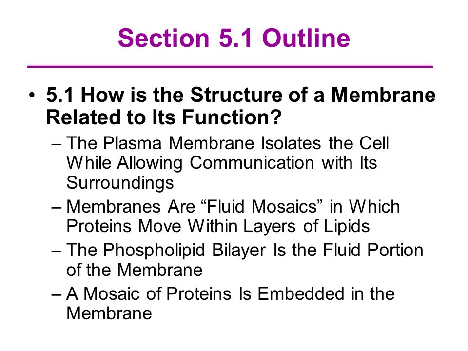 outline the roles of plasma membrane Describe the molecular components that make up the cell membrane relate structures of the cell membrane to its functions describe how molecules cross the cell membrane based on their properties and concentration gradients compare and contrast different types of passive transport with active transport, providing.
