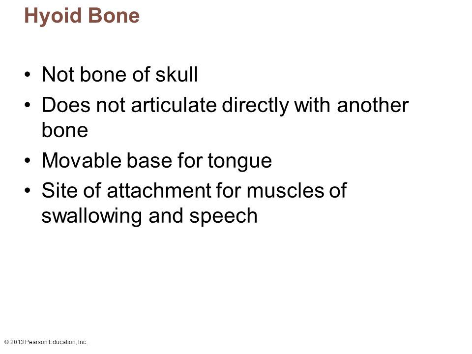 7 the skeleton: part a. - ppt video online download, Human Body