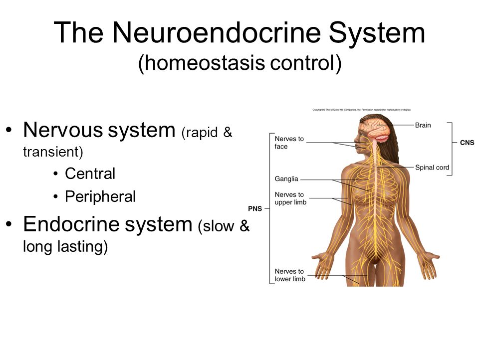 Skeletal Muscle Physiology & Neuroendocrine System - ppt download
