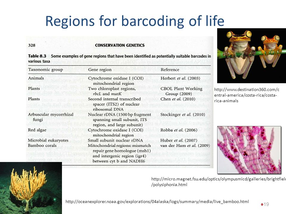 Regions for barcoding of life