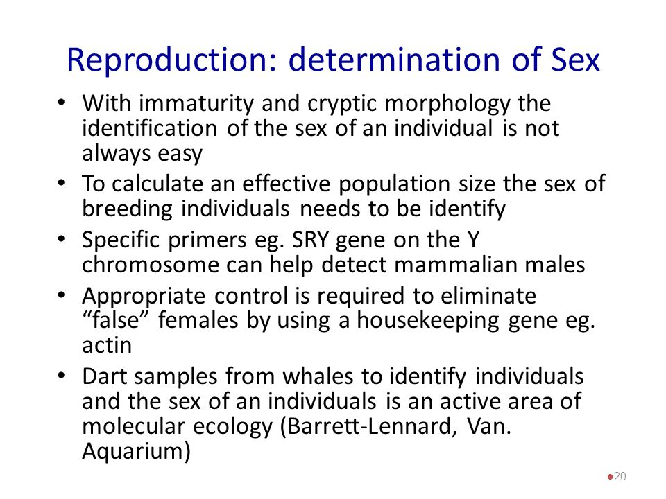 Reproduction: determination of Sex