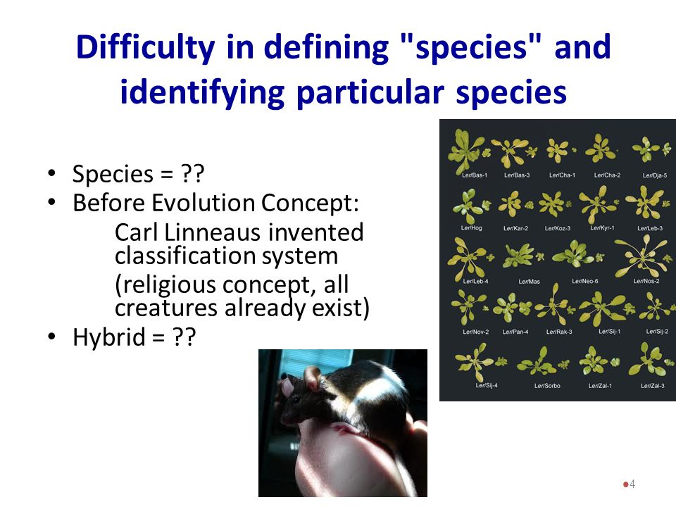 Difficulty in defining species and identifying particular species
