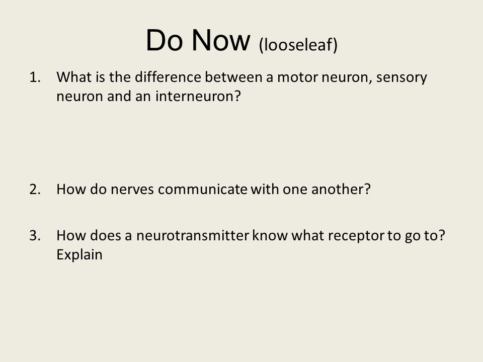 explain the relationship between motor neuron and efferent