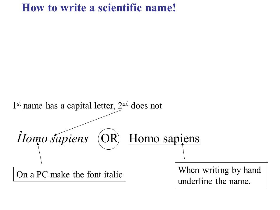 how to write the scientific name of an organism