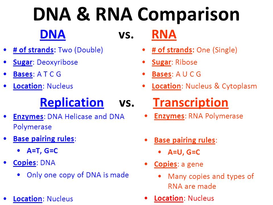 DNA & RNA Comparison DNA vs. RNA Replication vs. Transcription