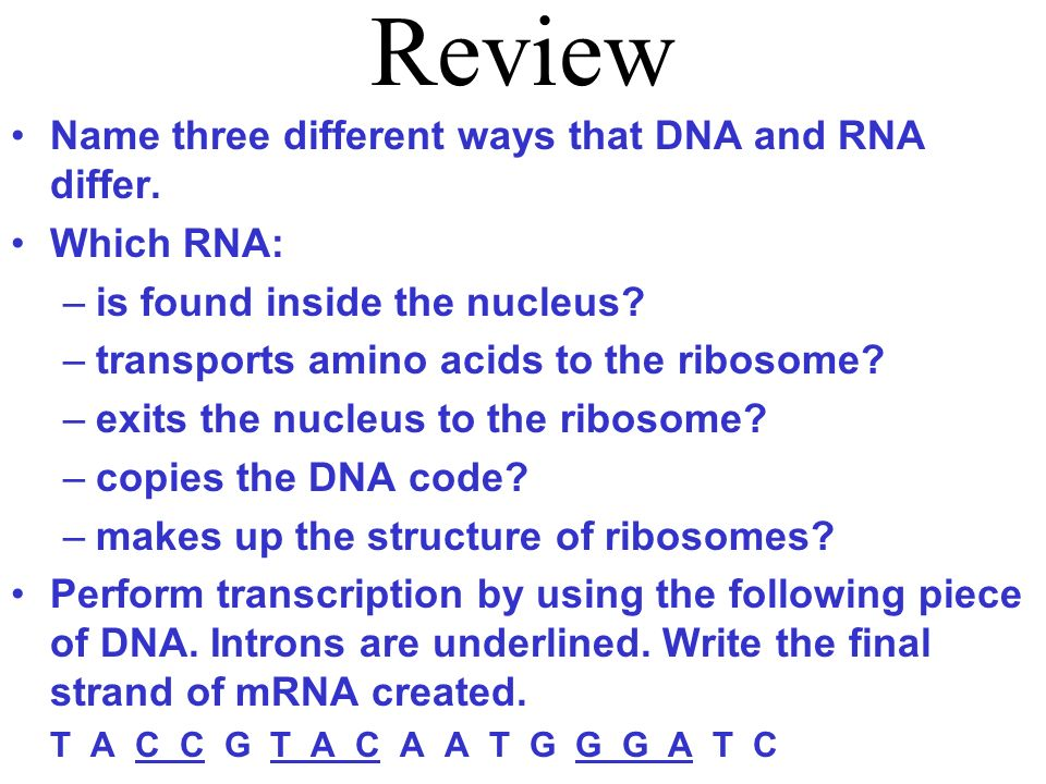 Review Name three different ways that DNA and RNA differ. Which RNA: